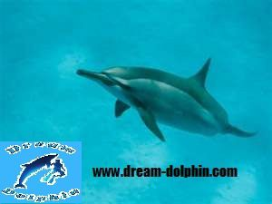 long-bec-dream-dolphin.jpg