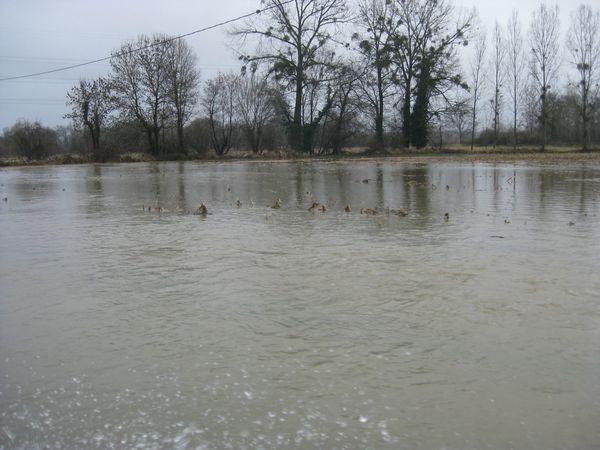inondationbordèresjanv2014 019 r50 q80