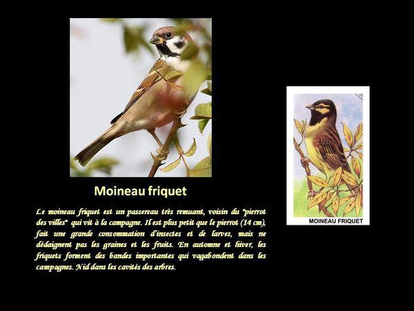 Saillancourt - 6 - 21
