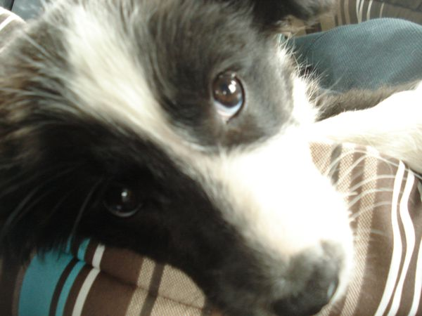 The-fashion-therapy-sky-is-blue-fashion-border-collie.JPG
