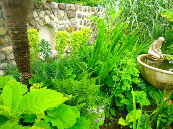 euphorbes le blog des plantes exotiques rustiques. Black Bedroom Furniture Sets. Home Design Ideas