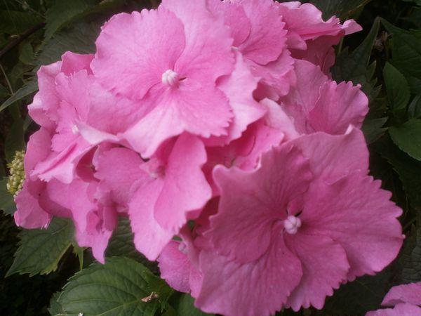 jardin-4-juillet-2013-043.JPG