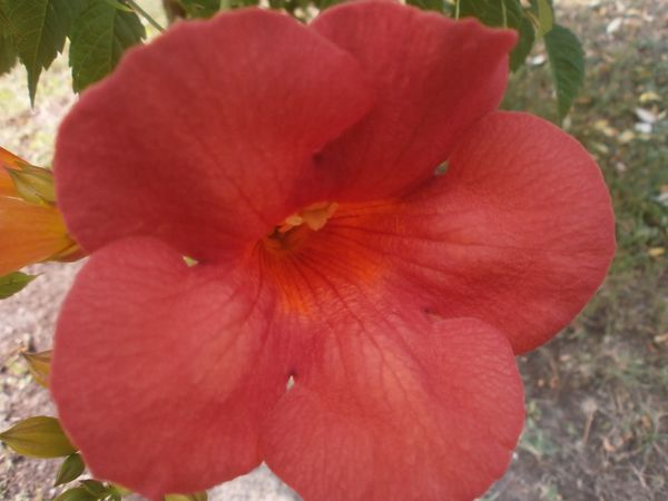 jardin-du-14-juillet-2013-053.JPG