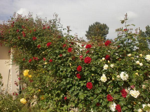 24-mai-jardin-acacias-050.JPG