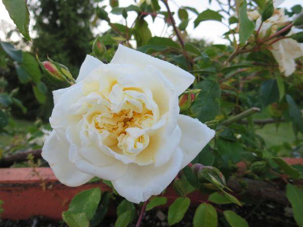 jardin-4-mai-025.JPG