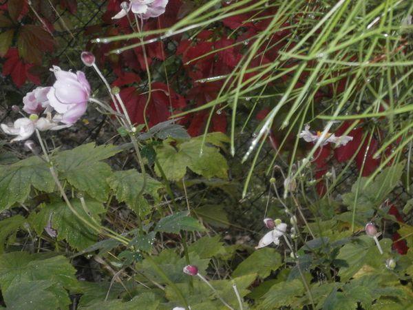 Foret-jardin-divers-Sept-2013-088.JPG