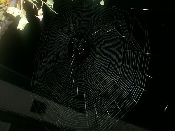 toile-d-araignee-de-nuit-006.JPG