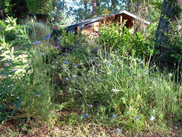 jardin fin mai 2009 015
