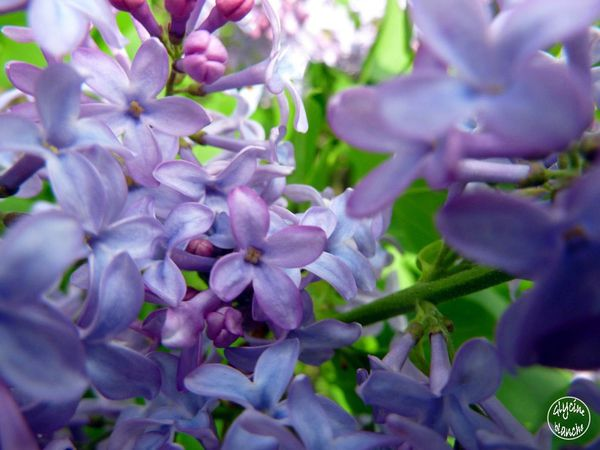LILAS-13--1600x1200-.jpg