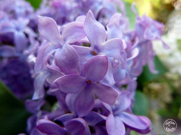 LILAS-4--1600x1200-.jpg