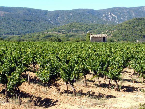 lubéron viticole.jpg