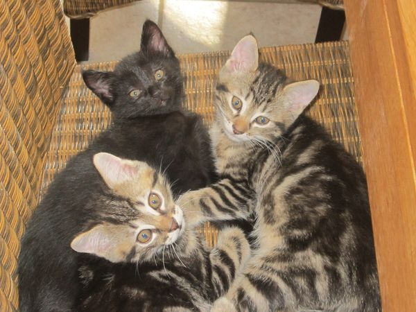Chats-et-chatons-0168.JPG