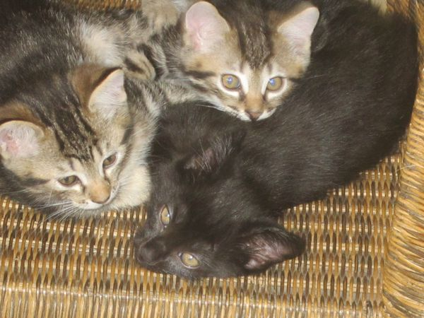 Chats-et-chatons-0193.JPG