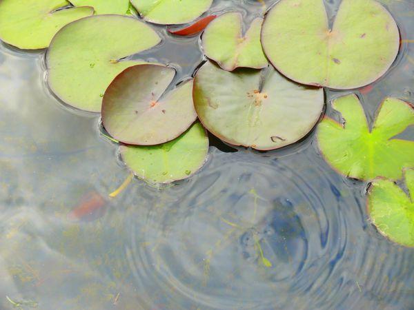 Capaulie-Photographie--248-.JPG