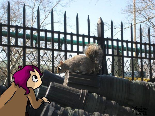 ecureuil-de-soso.jpg