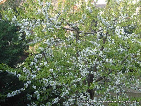 Cerisier-en-fleurs-2012-Vue-de-la-chambre.JPG
