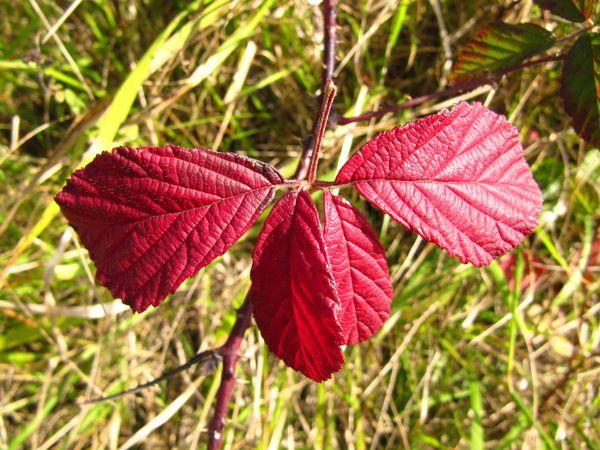 feuilles-octobre