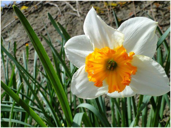 Fleur de jardin-06