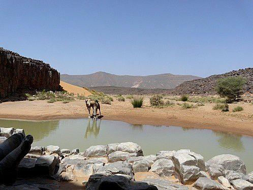 point-eau-desert-dromadaire-oasis-algerie.jpg