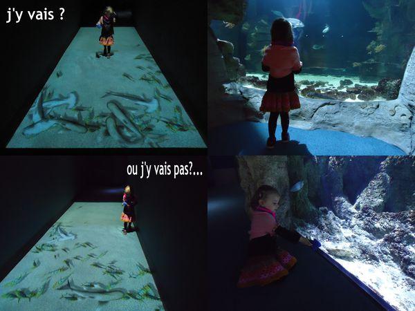 a17lili aquarium