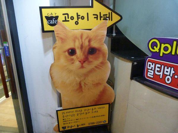 Hello Korea - Cat Cafe 03