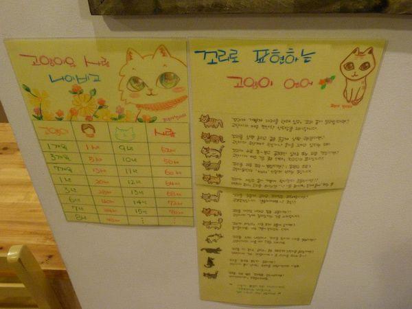 Hello Korea - Cat Cafe 11