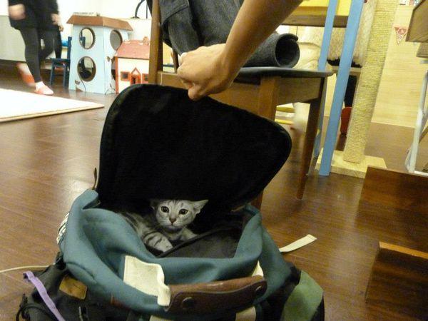 Hello Korea - Cat Cafe 34