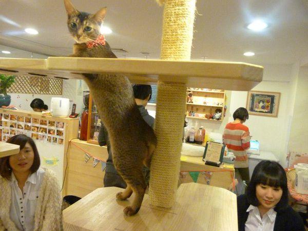 Hello Korea - Cat Cafe 38
