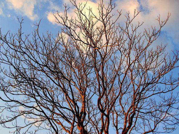 R01 - Branches
