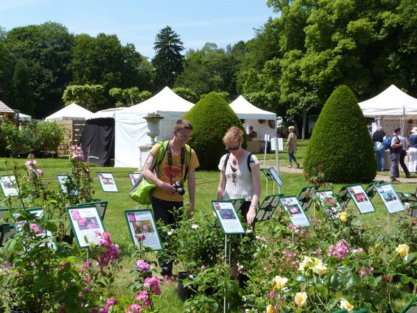 journees-de-la-rose-chaalis---juin-2014---david-et-cecile.jpg