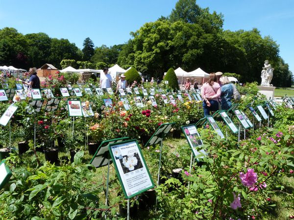 journees-de-la-rose-chaalis---juin-2014---mela-rosa.jpg