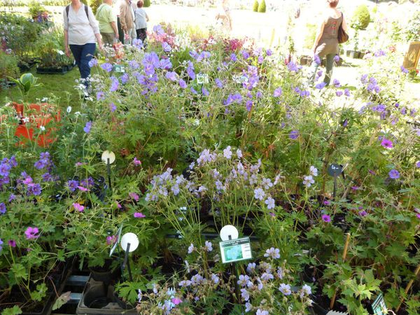journees-de-la-rose-chaalis---juin-2014---stand-d-copie-1.jpg