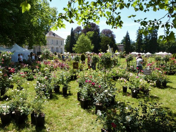 journees-de-la-rose-chaalis---juin-2014---stand-francia-th.jpg