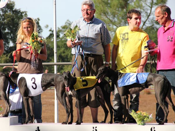 greyhounds-Christian-Magre 6694