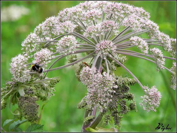 Fleur sauvage 4
