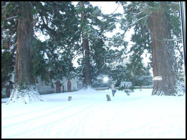 La cour aux séquoias