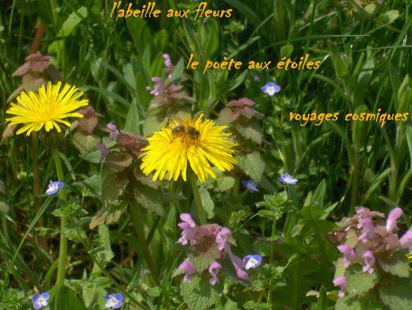 Haisha-a-l-abeille-2.jpg