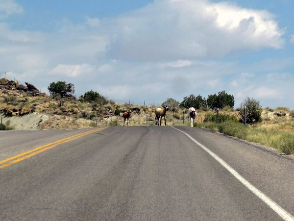 Route vers Four Corners chevaux 1