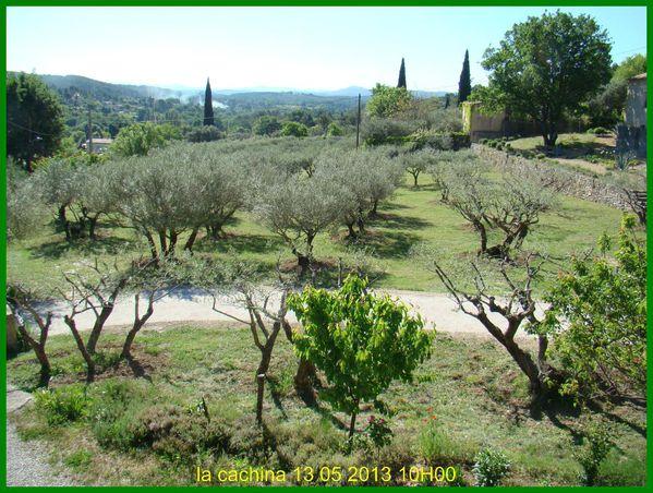 oliviers--2-.JPG