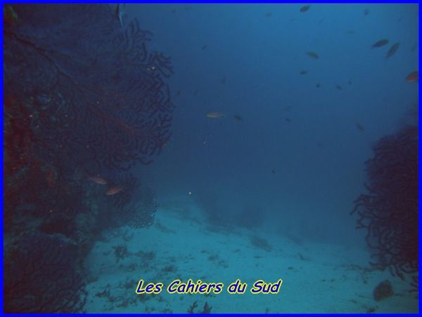 DSCN1524 [640x480]