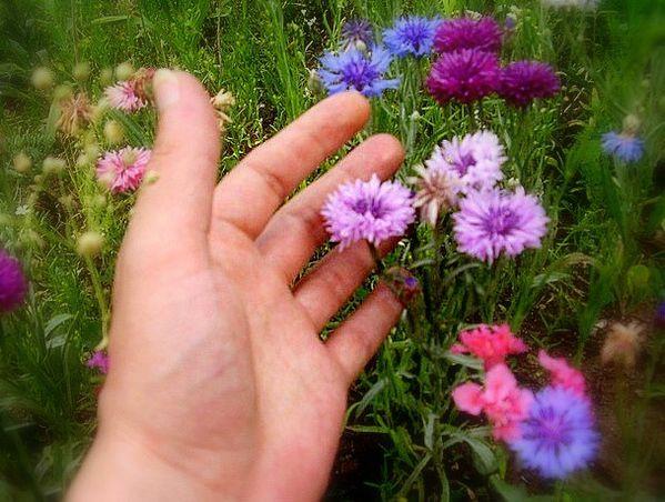 caresse-fleurs.jpg