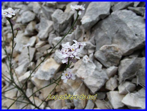 titou-ninou-septembre-2012 3455 [640x480]