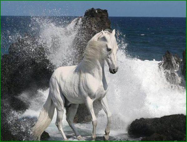 le cheval du président.