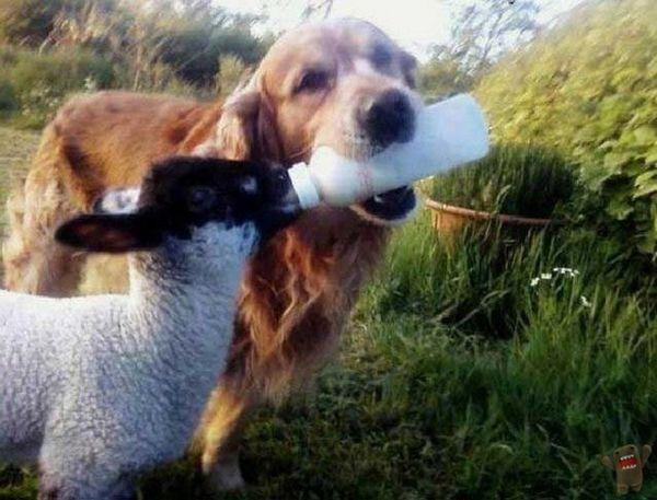 top-50-photos-animals-funny-spi0n-7.jpg