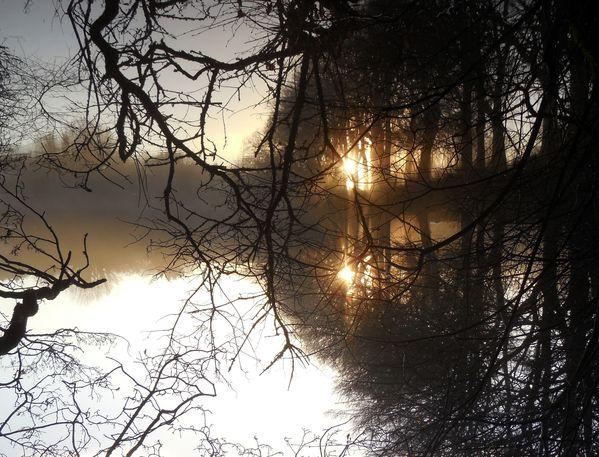 forêt des songes
