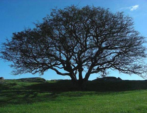 arbres 13