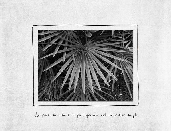 photo-palmier-.jpg