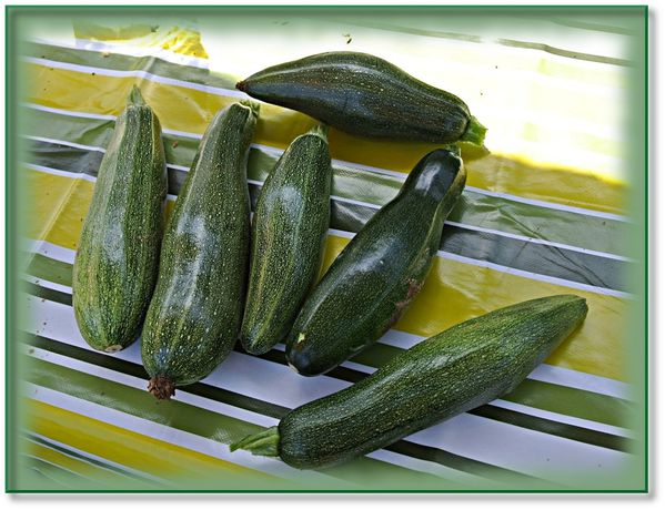 haricots-courgettes-cheval-3.JPG