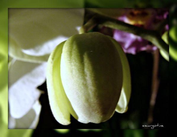 2012-03-23bis orchidées 2012 100