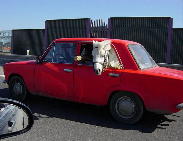 cheval-ferrari-rouge.jpg